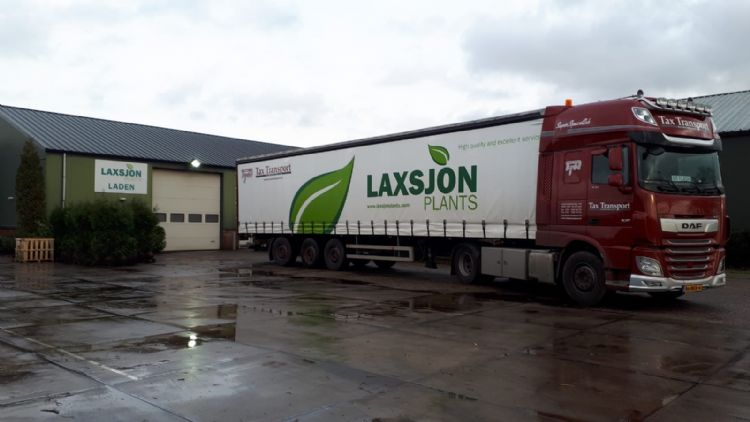 Foto: Laxsjon Plants