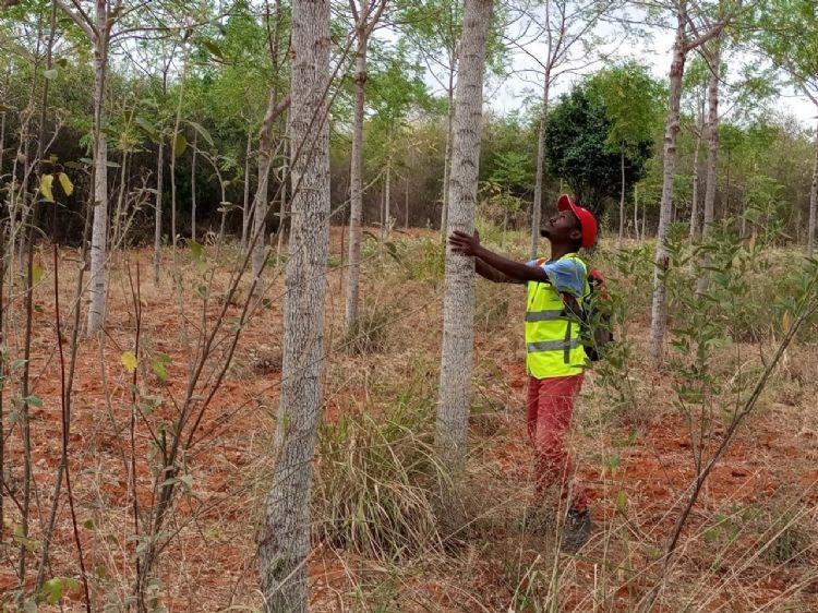 Projectleider Jeconiah van Stichting Africa Wood Grow. De bomen groeien op het land van Stella, een lokale boerin. 61 boeren volgden haar voorbeeld